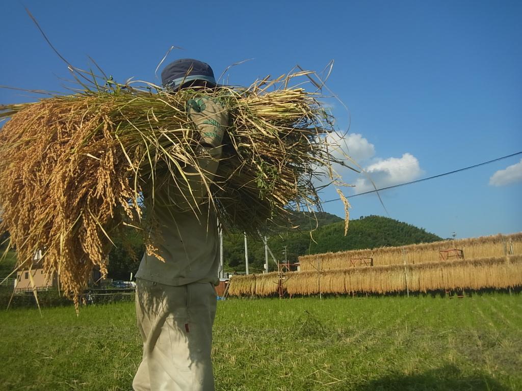 お米を自給自足して生活する。