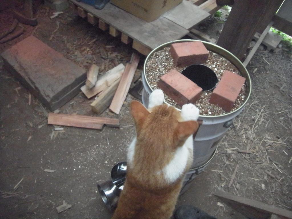 ロケットストーブと茶トラ白猫。