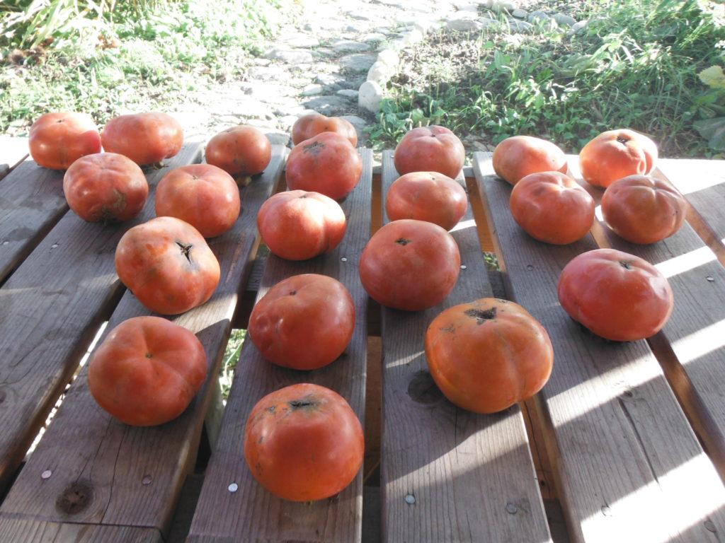 熟した甘柿がたくさん置いてある。