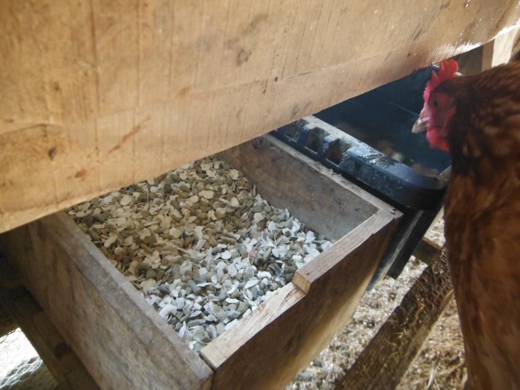 牡蠣殻と小石が入った容器。