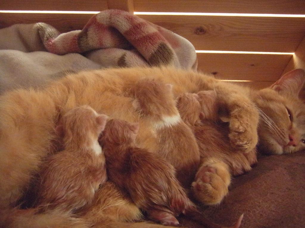 5匹の子猫から、オッパイを吸われる。