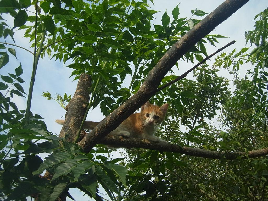木に登った茶トラの子猫。