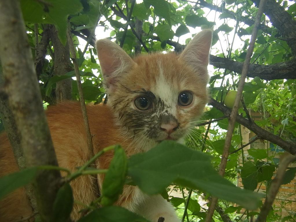 顔面に土がついた茶トラの子猫。
