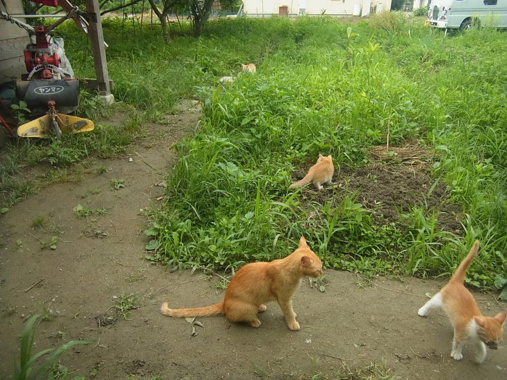 茶トラ猫と子猫が外で遊んでいる。