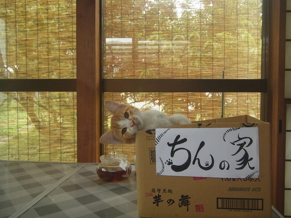 茶トラの子猫の名前が決まる。