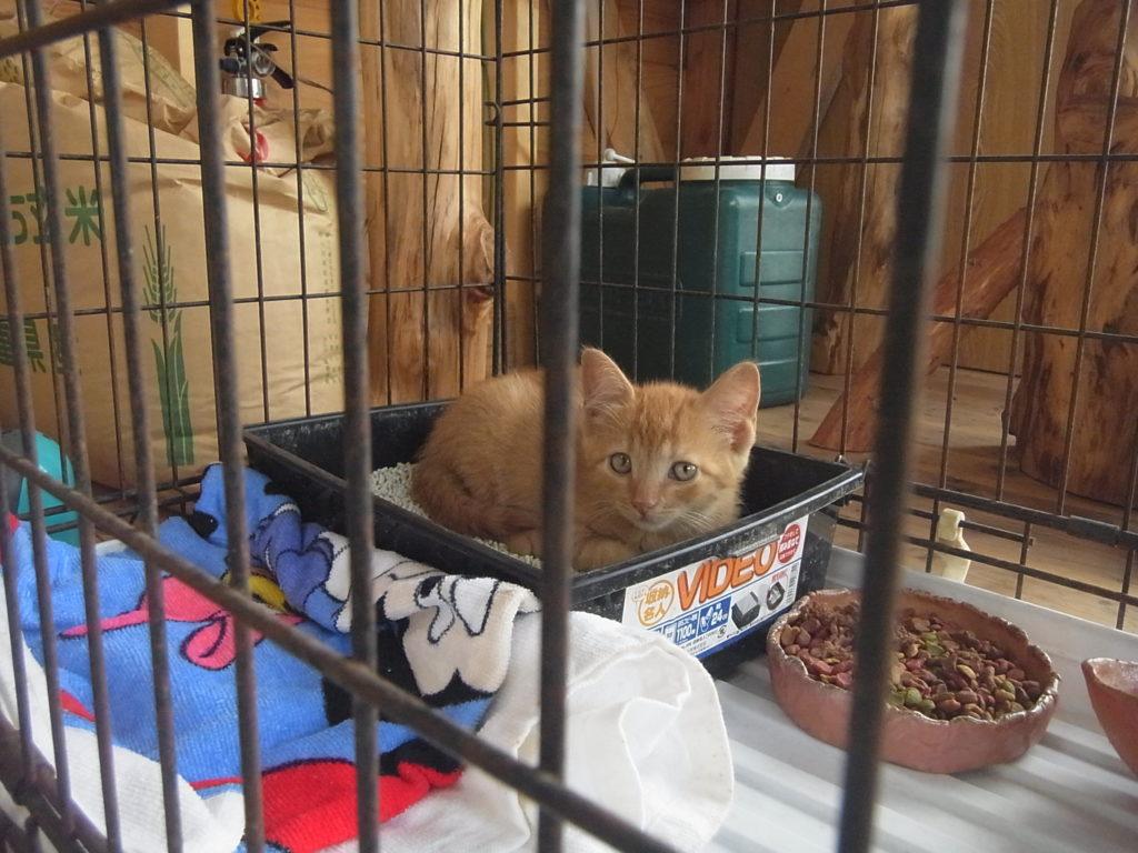 カゴに入った子猫が伏せしている。