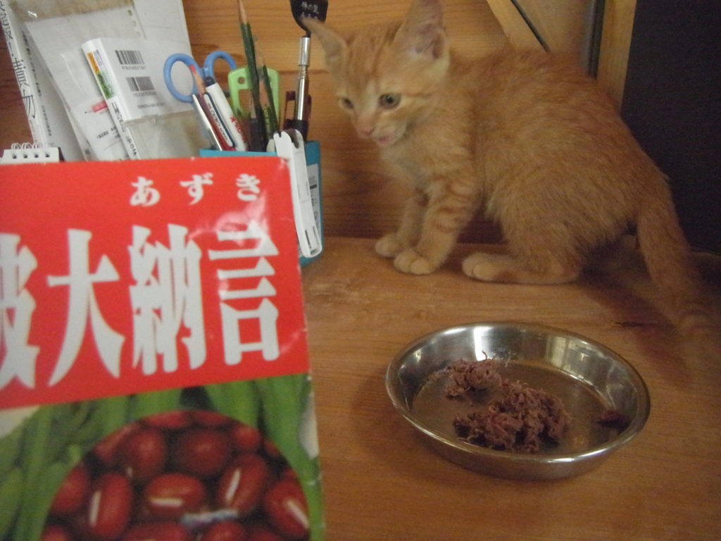 あずきの種の袋と茶トラの子猫。