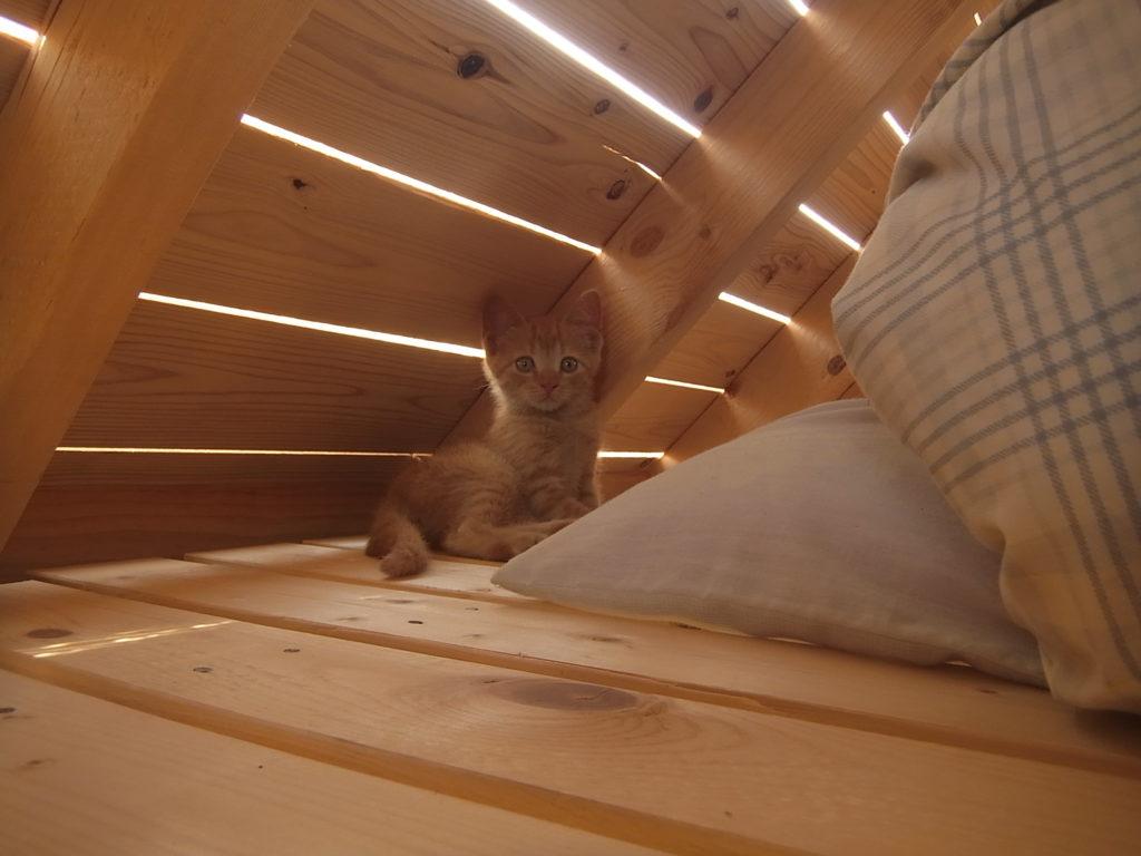 スモールハウスのロフトに子猫が座っている。