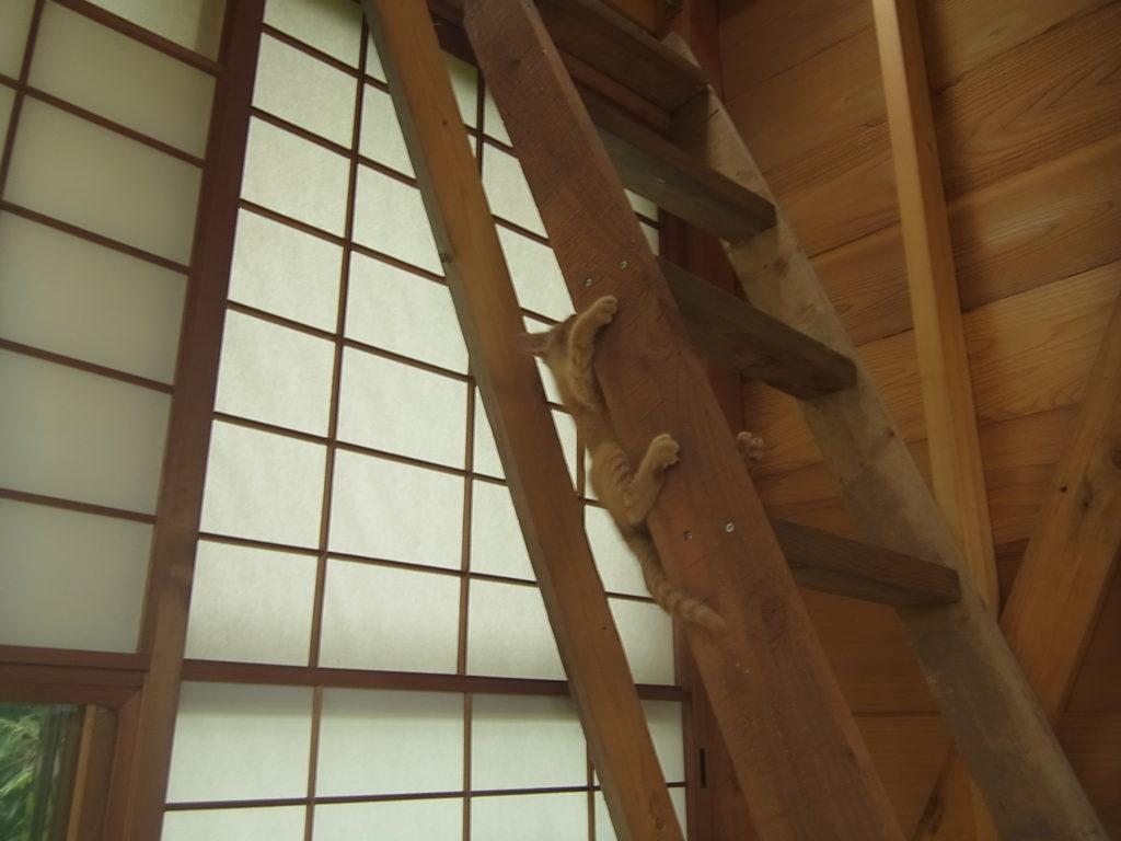 階段にぶら下がって登る猫。