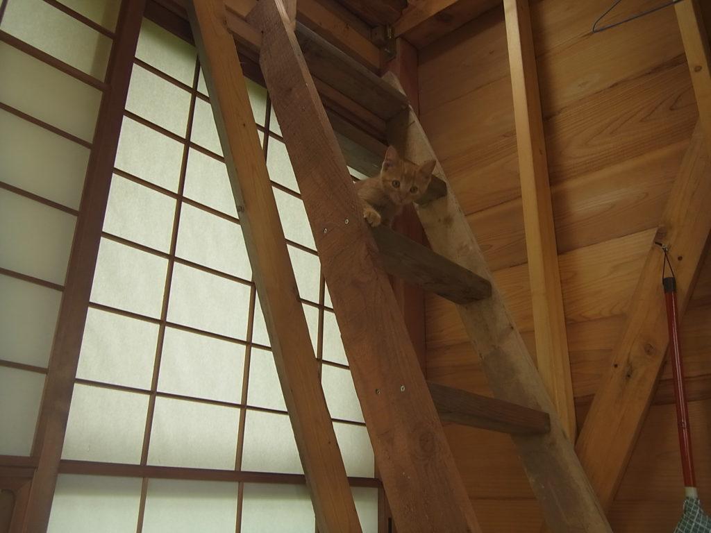 階段に登る猫。