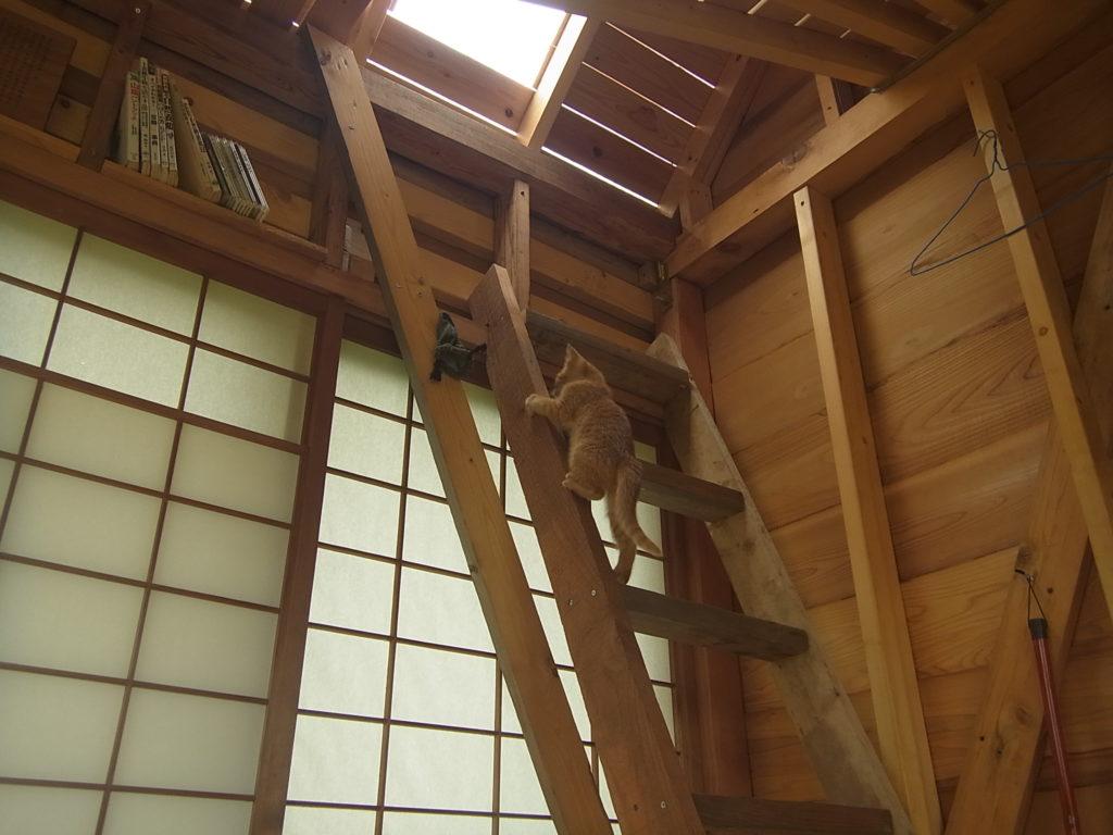 階段の端を使って猫。