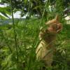 二品足で立って草を食べる子猫。