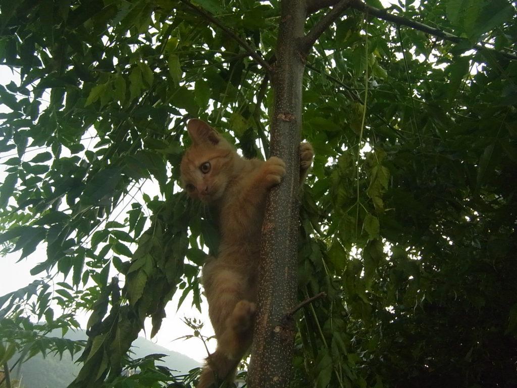 木に垂直登りする猫。