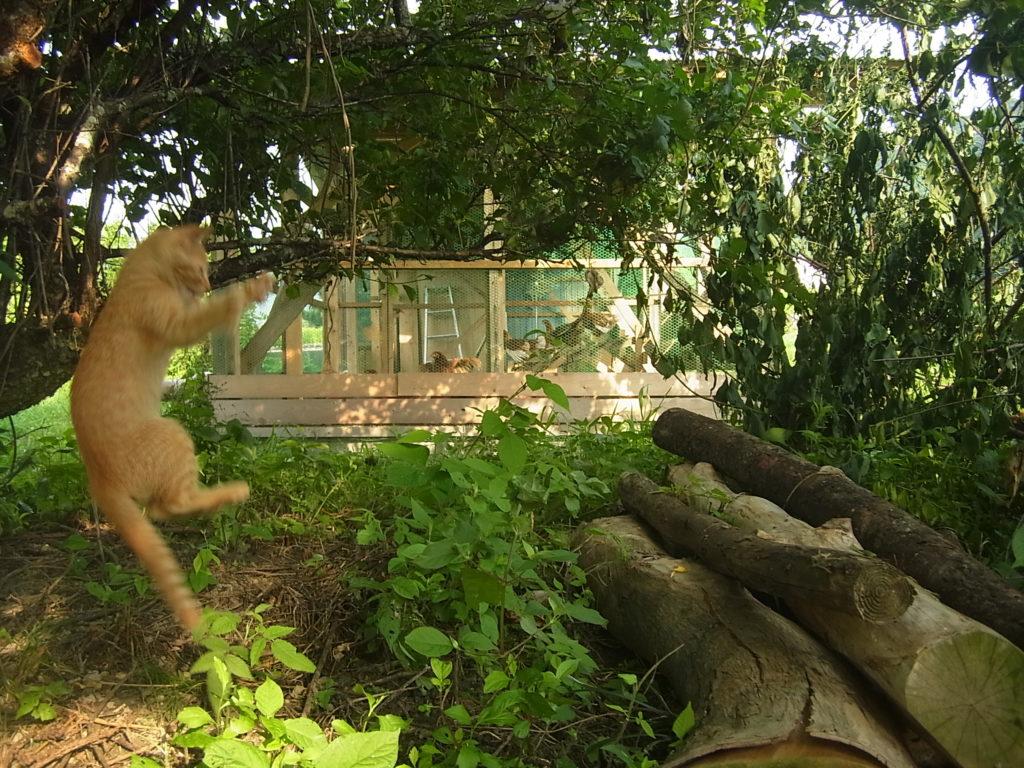 直上ジャンプする猫。
