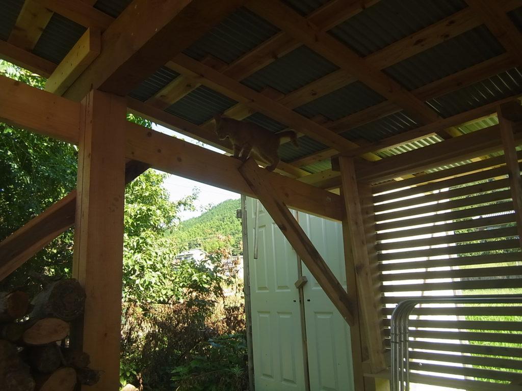 梁の上に登る猫。