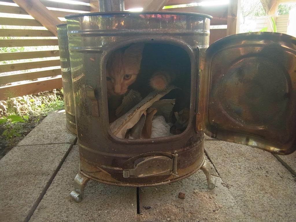 時計ストーブの中に入る猫。