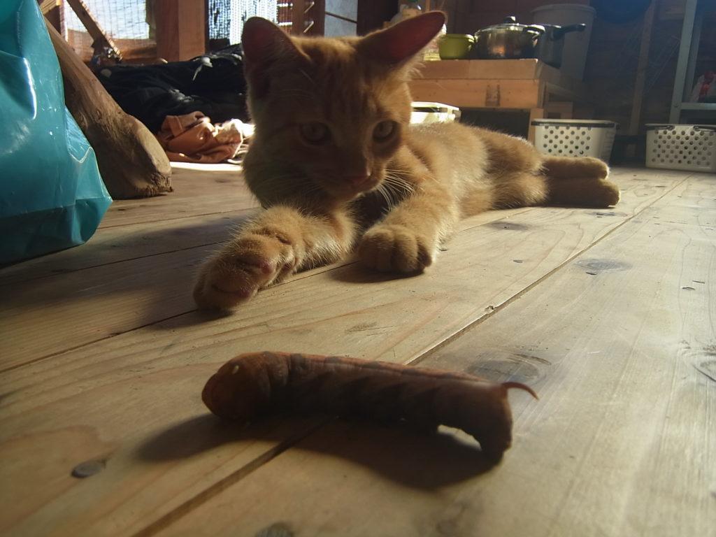 茶色い芋虫と寝転がる猫。