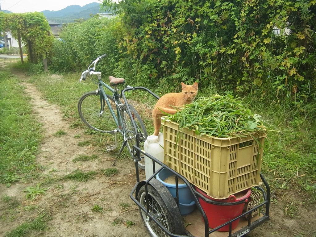 ハコブンダーの上に乗った猫。