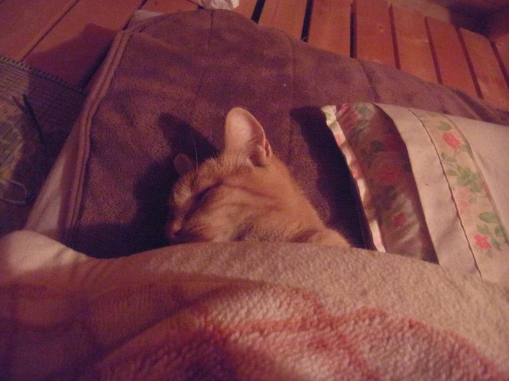 布団をかぶって眠る猫。