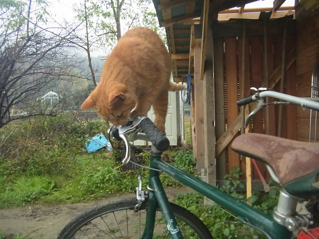 緑の自転車のハンドル部分に乗る猫。