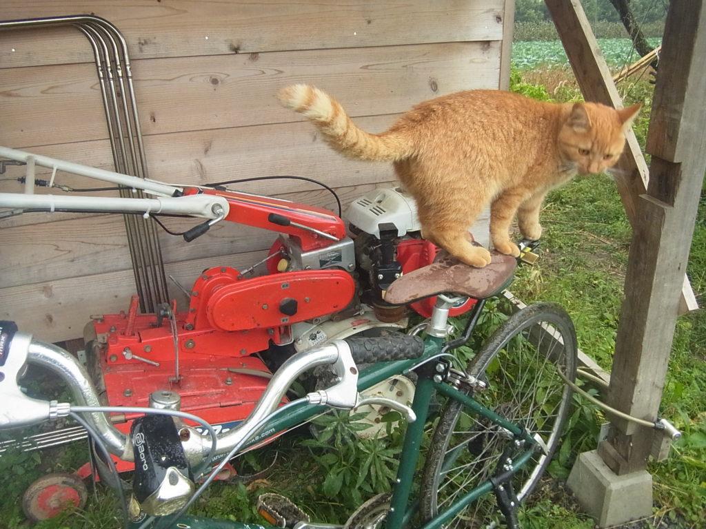 自転車のサドルに乗る猫。