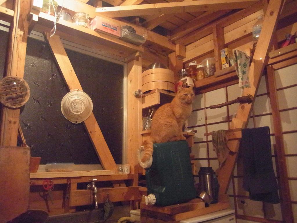 ポリタンクの上に乗ってる茶トラ猫。