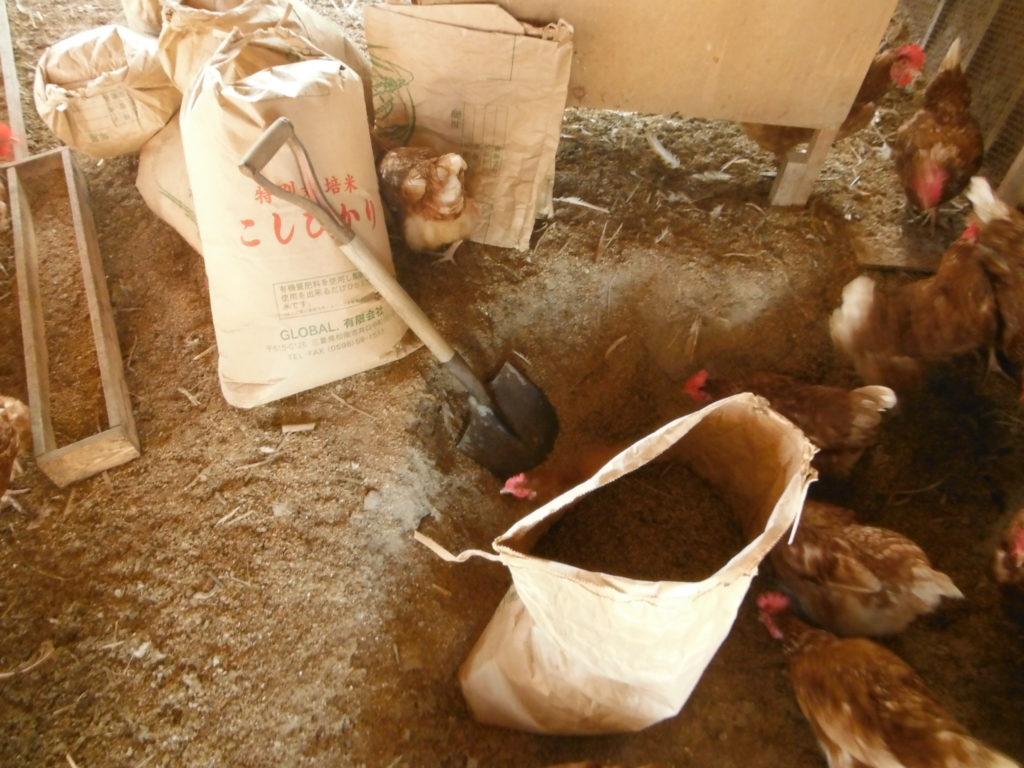 鶏糞を取り出す。