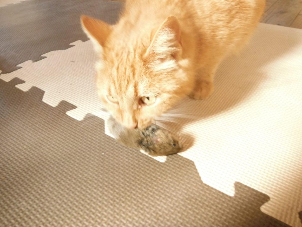 猫がネズミを捕まえる。