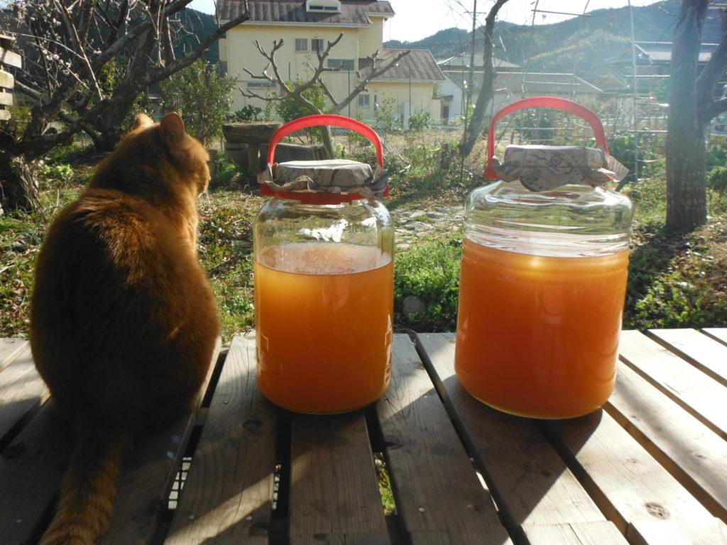 出来上がった柿酢2瓶。