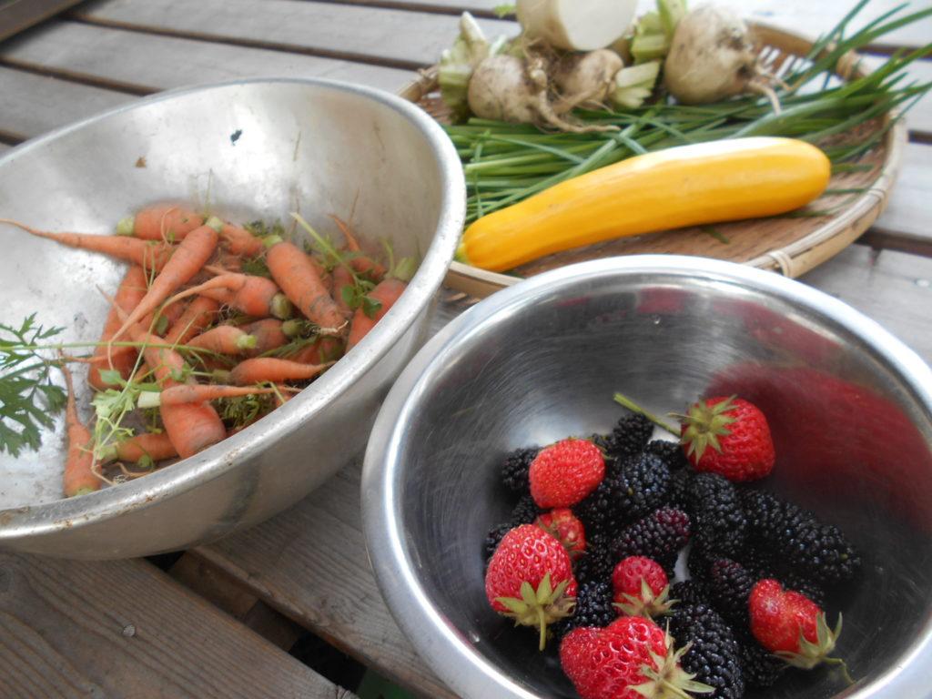 収穫した野菜や果物。