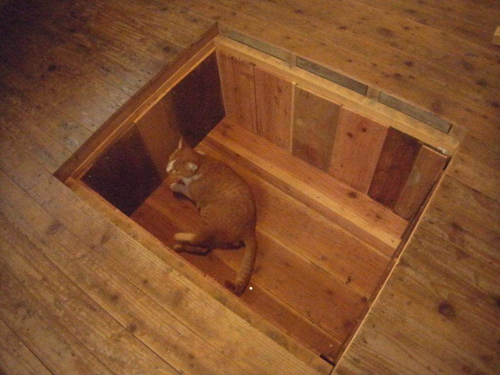 床下収納に猫が入る。