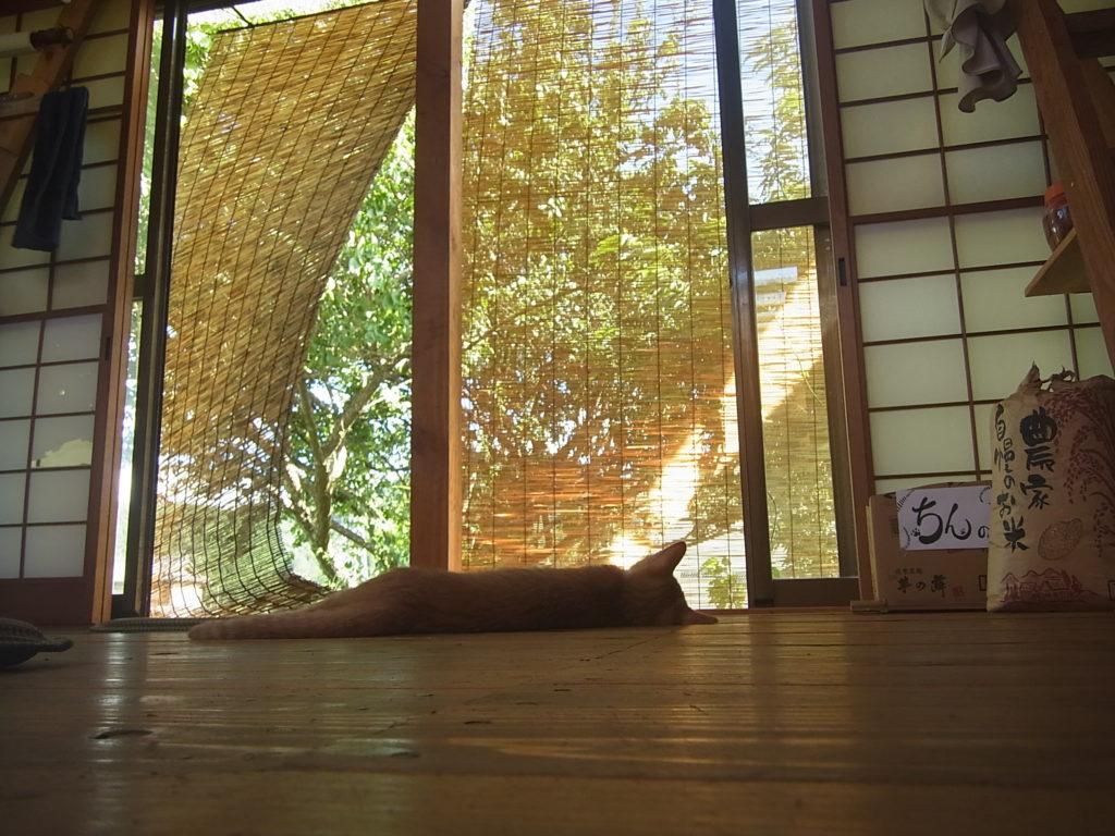 窓辺で、涼をとる茶トラ白猫。
