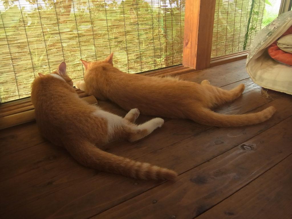 母と子揃って同じ格好で眠る茶トラ猫。