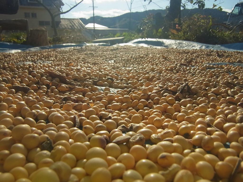 大豆の天日干し。