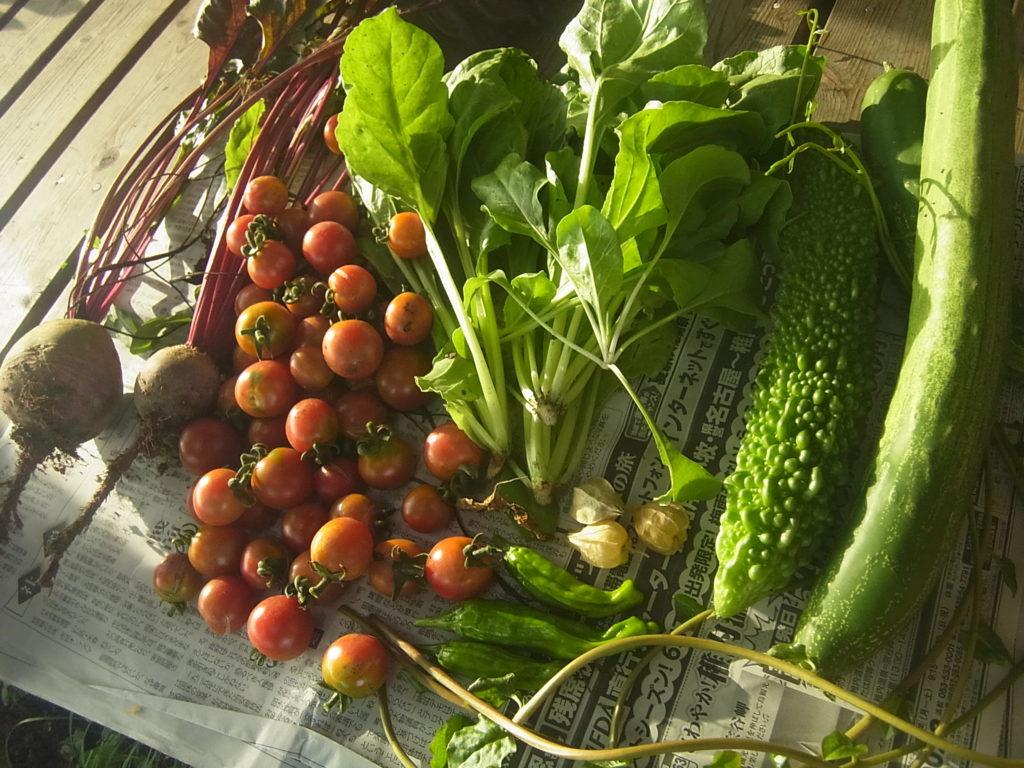 収穫された色とりどりの野菜達。