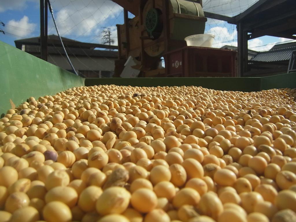 収穫して、唐箕で選別された大豆。