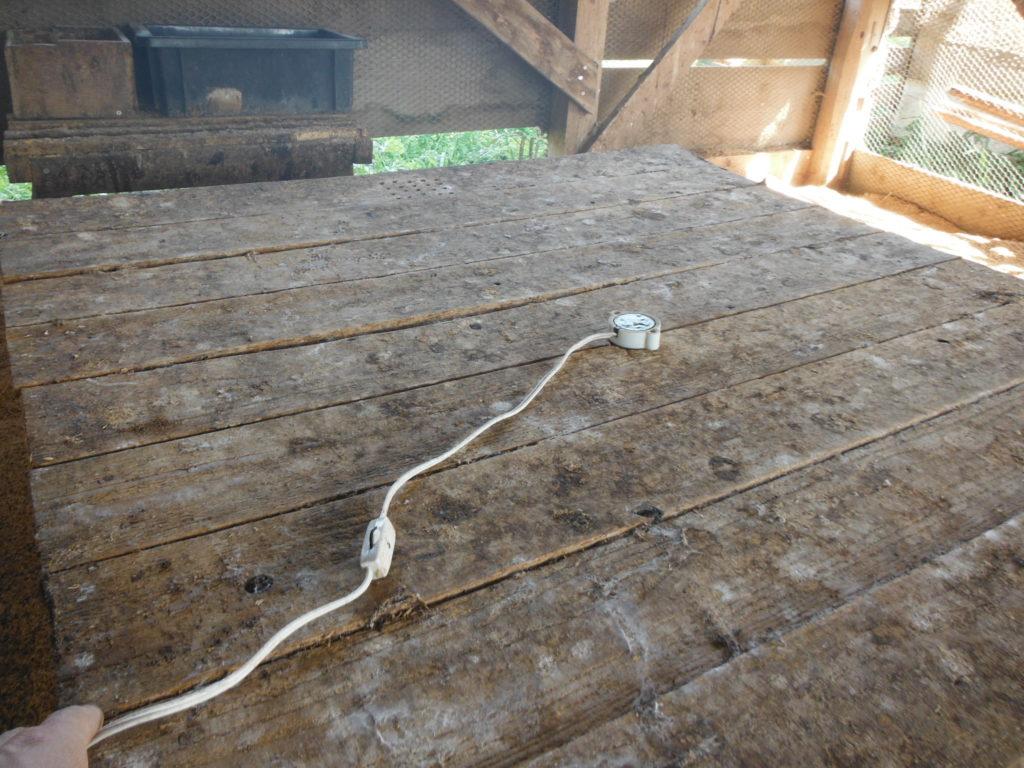育雛箱に電球をセット。