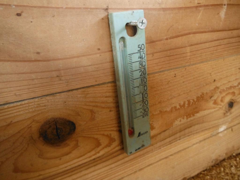 育雛箱に温度計をセット。