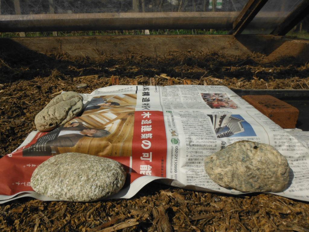 育苗箱を新聞袖覆う。