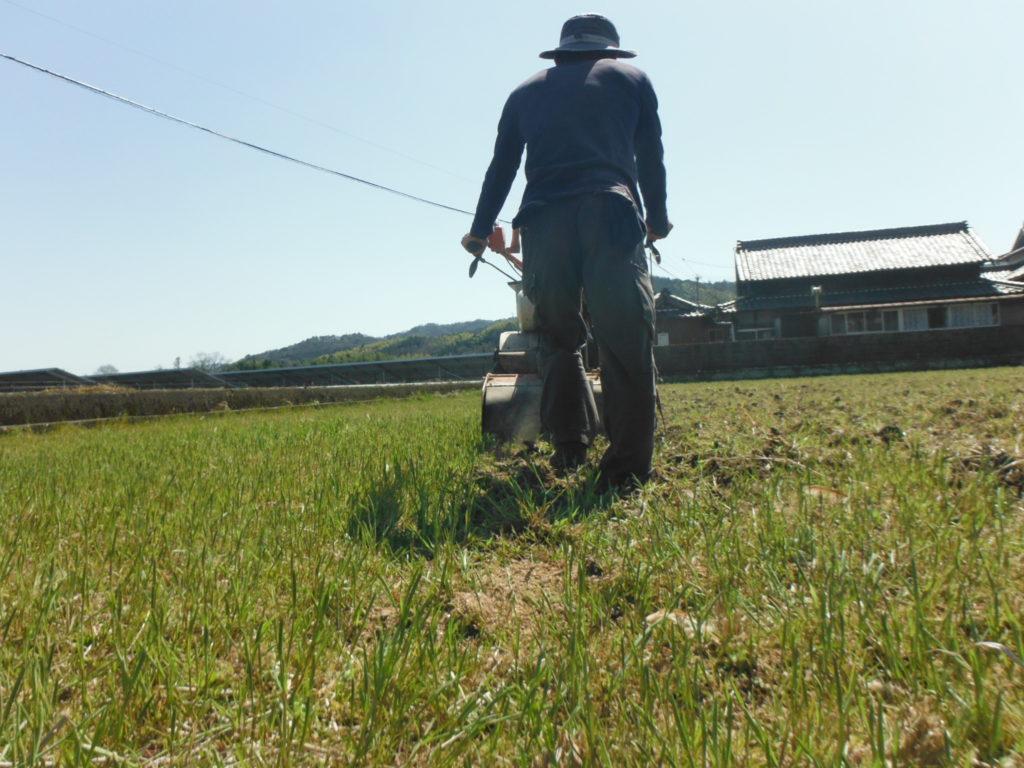 田んぼをディーゼル耕運機で耕す。