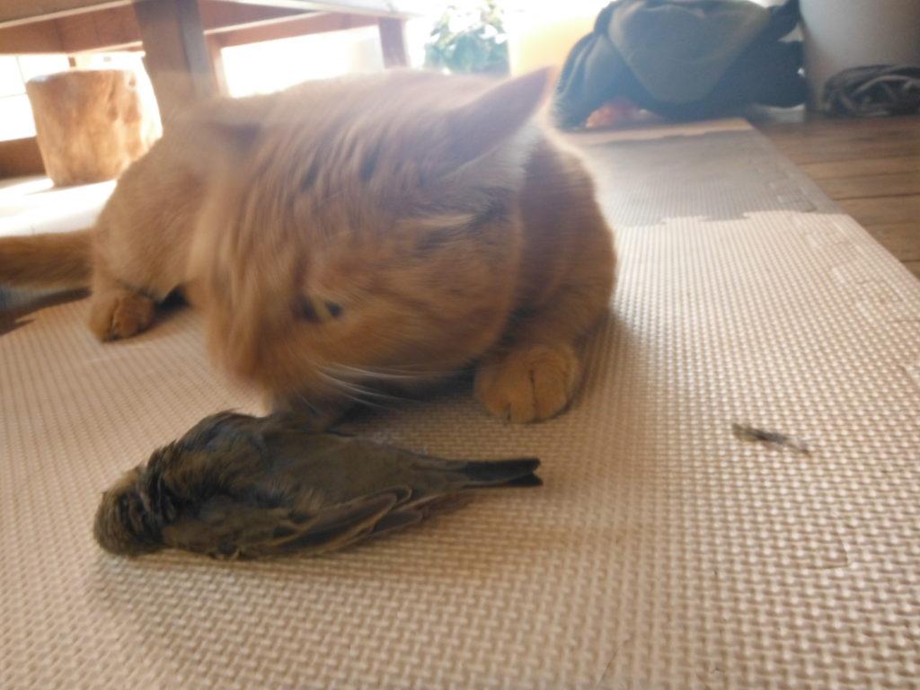 猫がヒバリを自給自足。