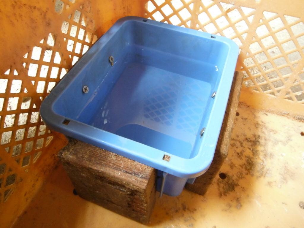 水飲み器を鶏籠に入れる。