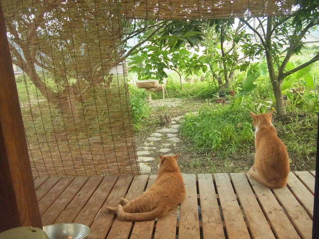 縁側でくつろぐ茶トラ猫。