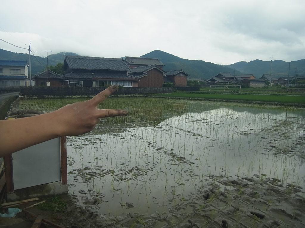 7畝の田んぼ全部田植え終わる。