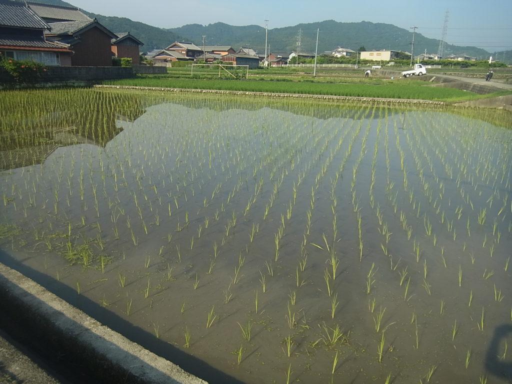田んぼに水を張る。