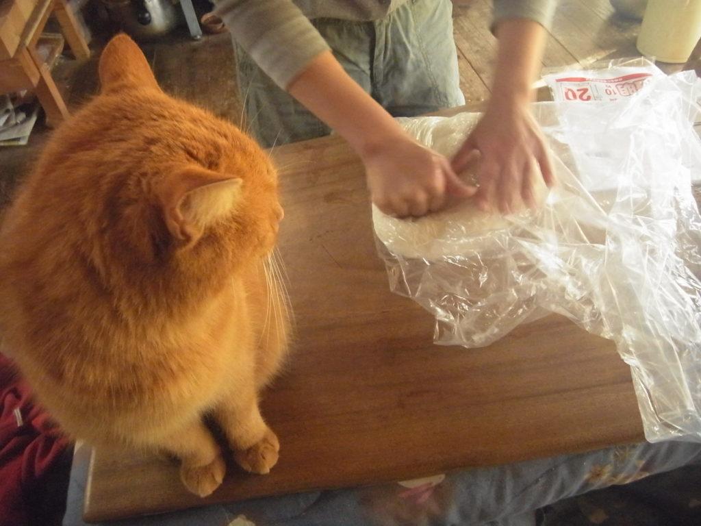伸し餅を作る所を眺める茶トラ猫。