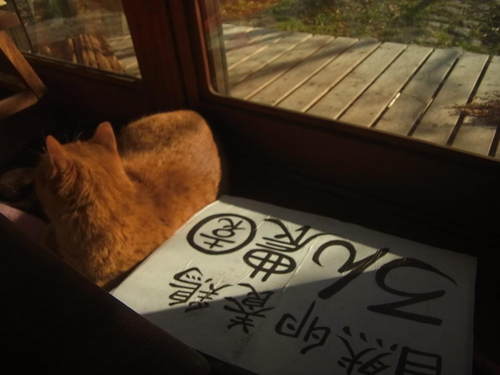 看板と茶トラ猫。