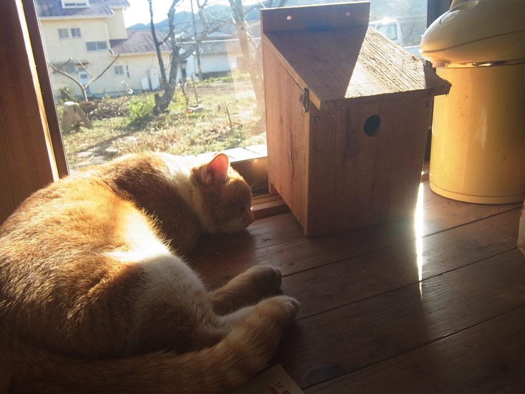 窓際で眠る茶トラ白猫。