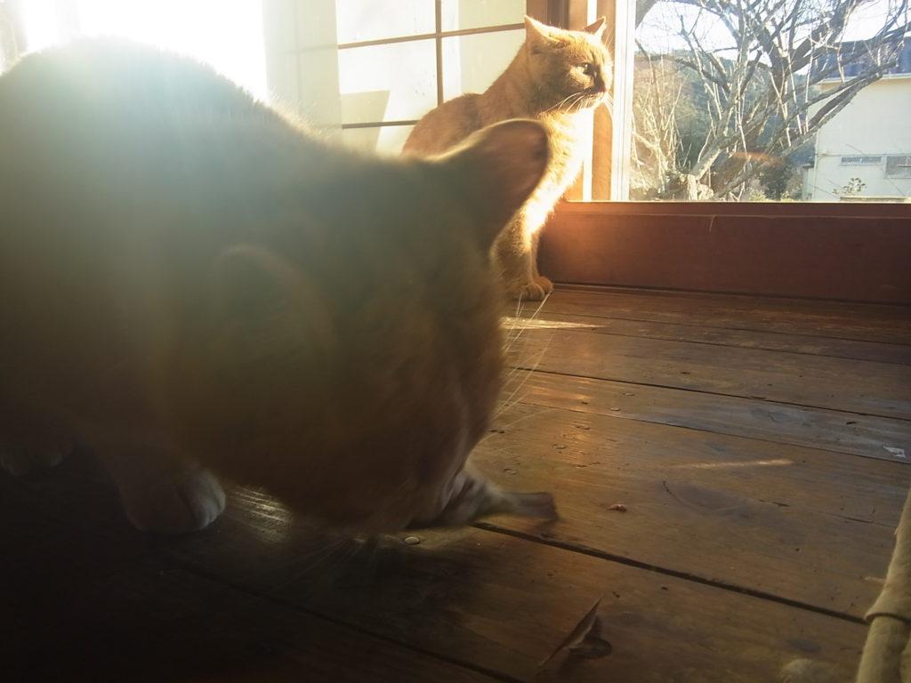 スズメを食べる茶トラ白猫。