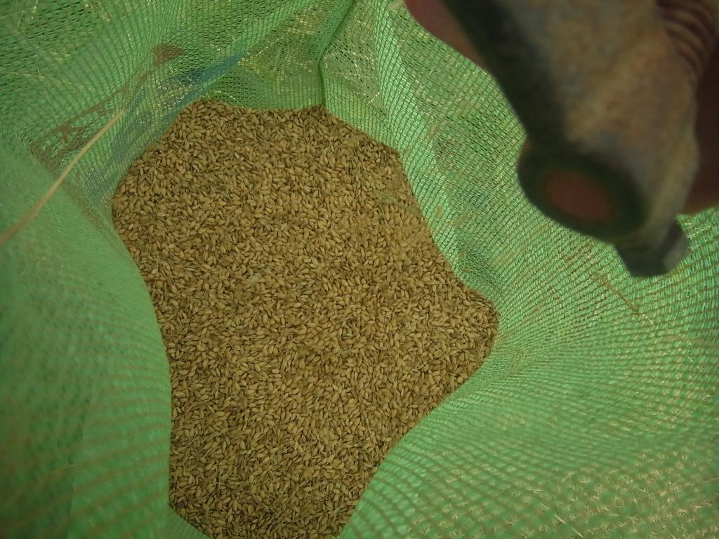 ハーベスターで脱穀されたお米。